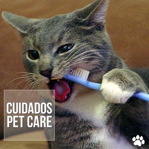 cuidados1 - Cárie dos gatos afeta 68% dos felinos em idade adulta