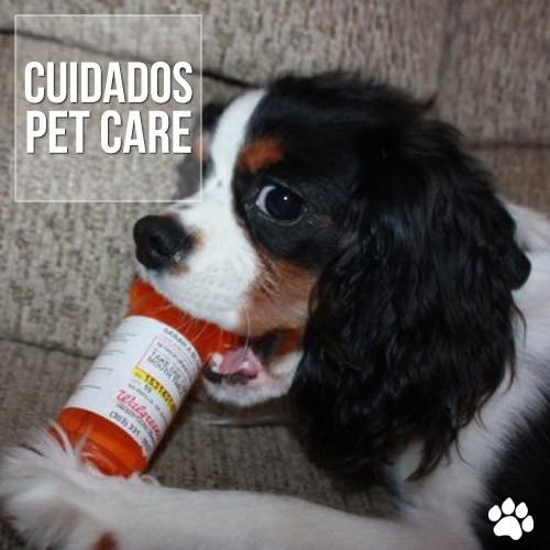 cuidados3 - Intoxicação em cães e gatos por inseticidas