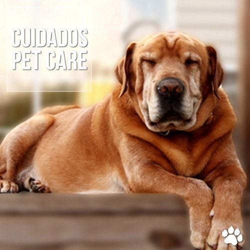 cuidados4 - Envelhecimento cerebral em cães e gatos