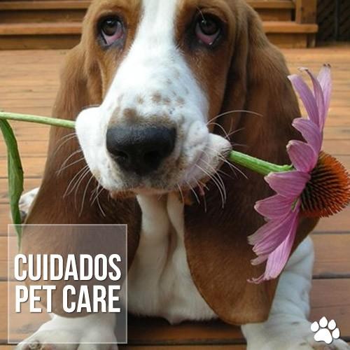 cuidados5 - Ectrópio em cães: O que fazer?