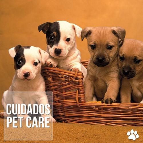 cuidados7 - Principais cuidados com filhotes de cães recém-nascidos