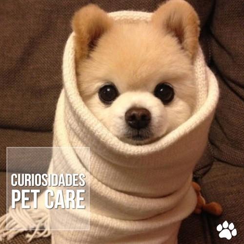curiosida2de - Os cães sentem frio?