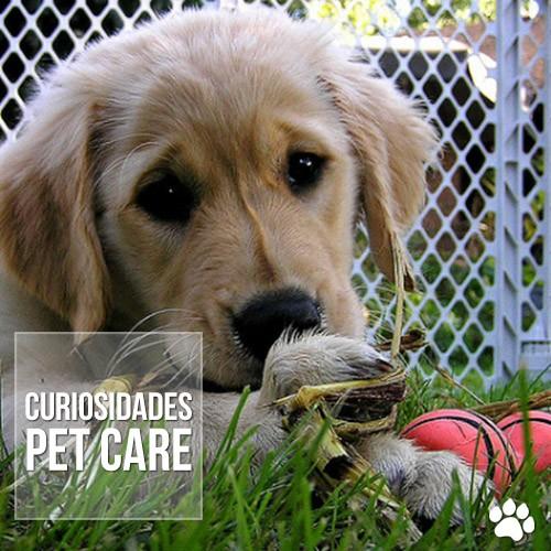 curiosidade - Cachorros sabem quando os donos estão tristes