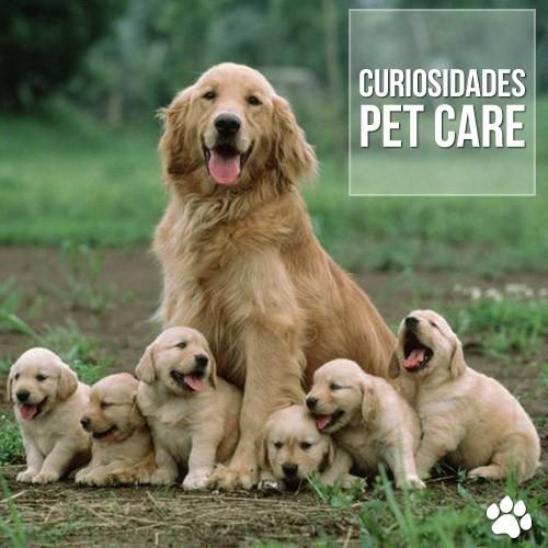 curiosidade1 - A maternidade em cadelas e gatas