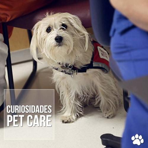 curiosidade2 - Menina de 7 anos ganha permissão para fazer cirurgia acompanhada de seu cãozinho