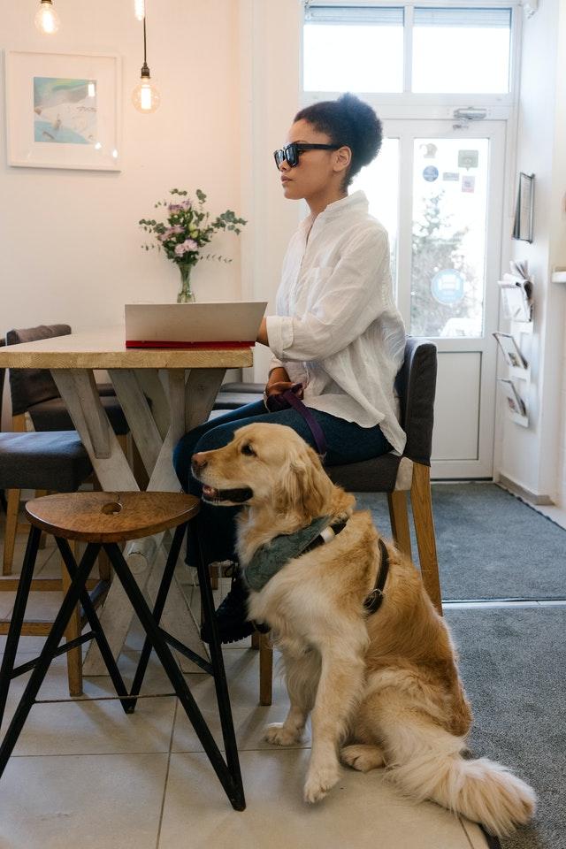 pexels mikhail nilov 6980934 - Cão-guia auxilia seu dono e seu colega canino cego