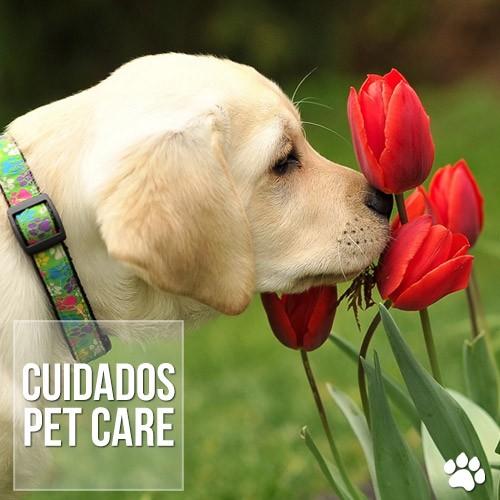 cuida1dos - 6 coisas para deixar bem longe do seu animal de estimação