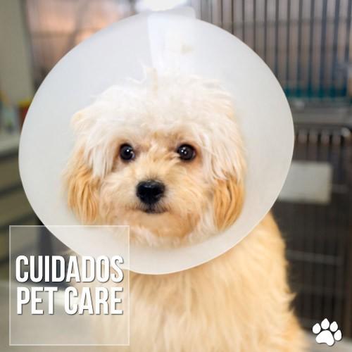 cuidados - Cães com sarna sarcóptica: O que fazer?