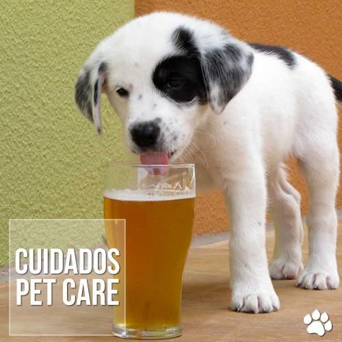 cuidados1 - Cães podem ter intoxicação alcoólica