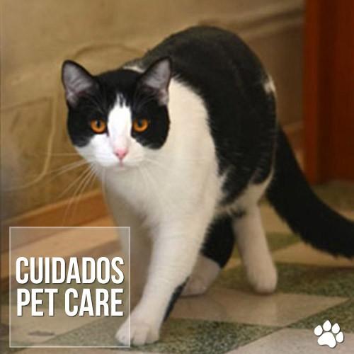 cuidados2 - Doença renal policística em gatos