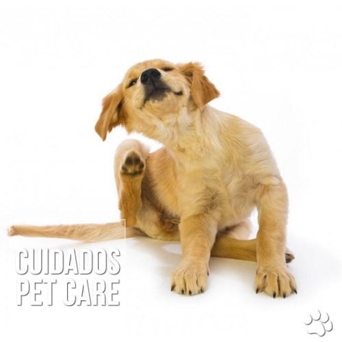 cuidados3 - Cachorro com pulgas: O que fazer?