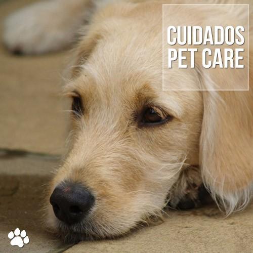 cuidados5 - Anemia em cães: Cuidados importantes