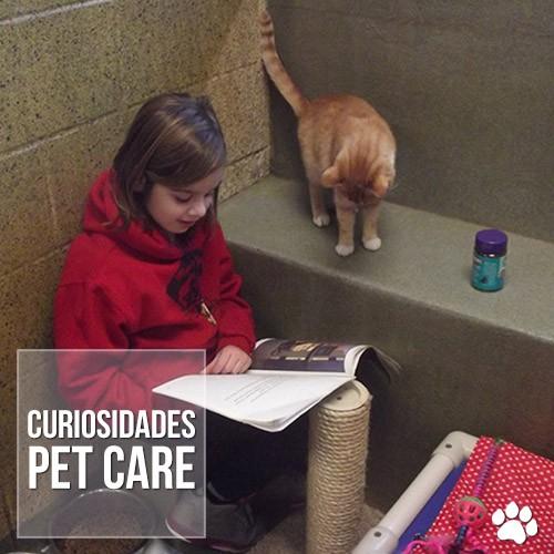 curiosidade1 - Crianças aprendem a ler enquanto fazem companhia para gatinhos abandonados