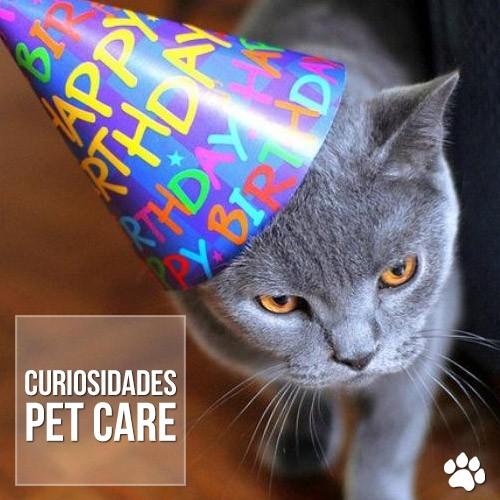 curiosidade2 - Qual é a idade do meu gato?
