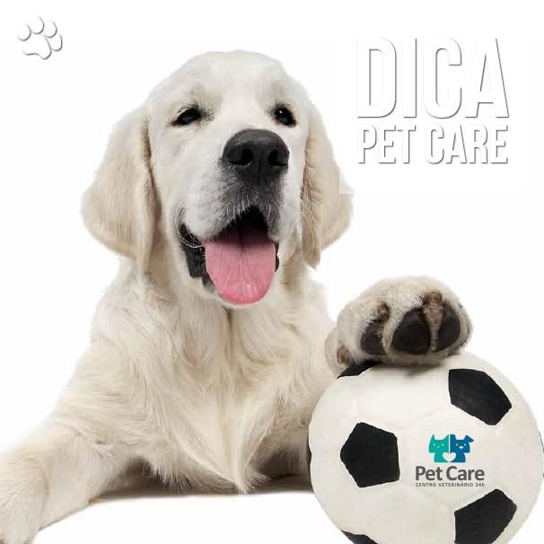 dic33a - Cuidados com o seu mascote durante a copa