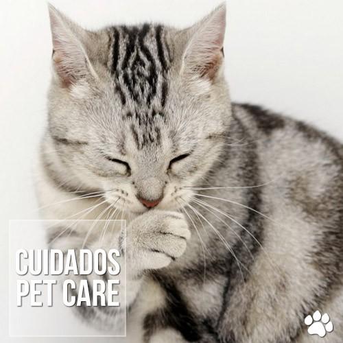 cui2dados - Alopecia psicogênica felina: Lambedura por estresse