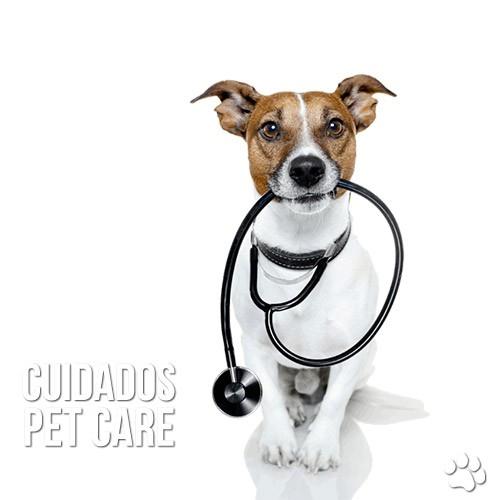 cuidados2 - Problema de próstata em cães