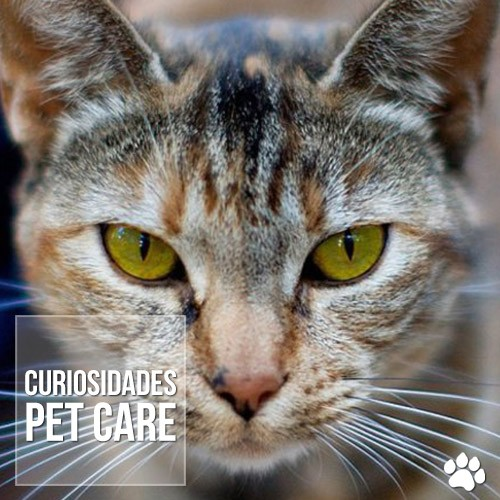 curiosidade - É verdade que cães e gatos enxergam em preto-e-branco?
