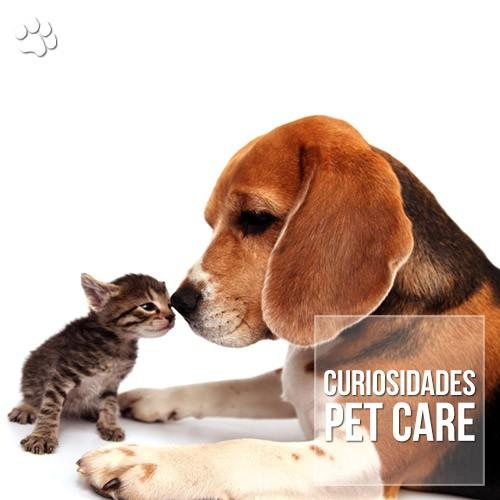 curiosidade2 - Como se explica a rivalidade entre cães e gatos?