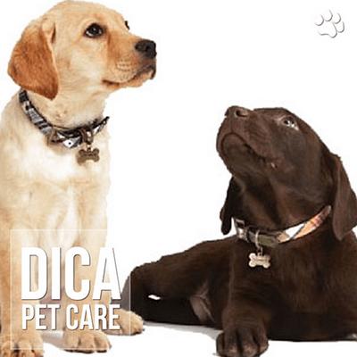 dica - Os nomes de cães e gatos mais populares no Brasil