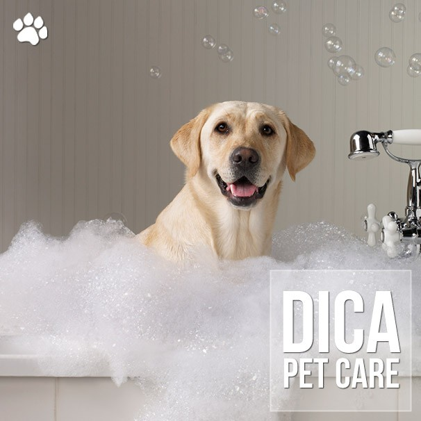 dicas de como dar banho nos caes em casa - Dicas de como dar banho nos cães em casa