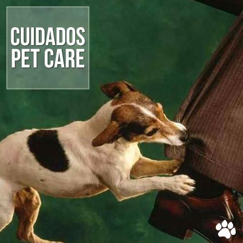 mordidas entre caes ou gatos - Mordidas entre cães ou gatos: Cuidados necessários