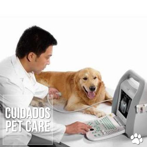 ultrassonografia veterinaria - Ultrassonografia Veterinária: Avanços e indicações do exame para cães e gatos