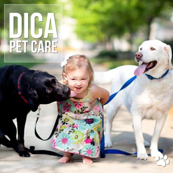 as melhores racas de cachorro para criancas - As melhores raças de cachorro para crianças