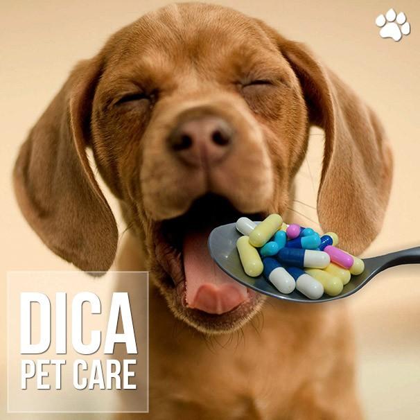 como dar medicamento via oral para o meu cachorro - Como dar medicamento via oral para o meu cachorro?