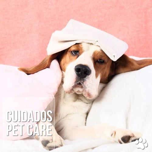 cuidados1 - Seu cachorro está com frio ou com dor?