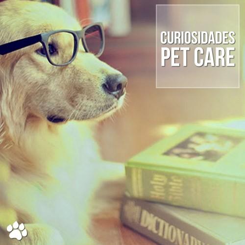 curiosidade - As 10 raças de cães mais inteligentes