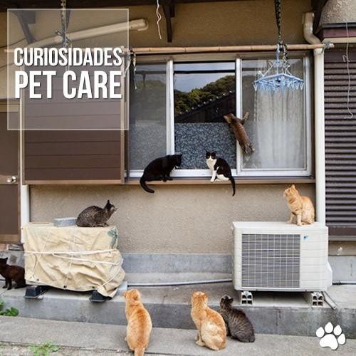 """curiosidade1 - Fukuoka, uma ilha """"dominada"""" por gatos"""