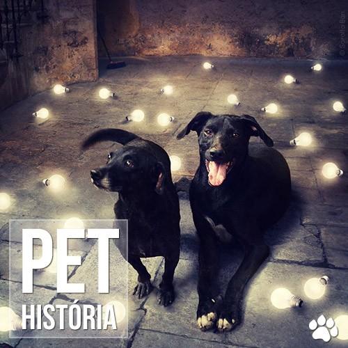historia - Fotógrafo cria montagens surreais com cachorros abandonados para incentivar adoção