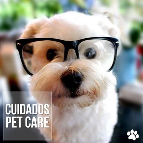 oftalmologia de caes e gatos - Doenças crônicas: Oftalmologia de cães e gatos