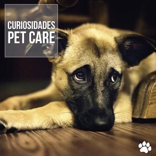 cachorros tambem sentem ciumes - Pesquisa demonstra que cachorros também sentem ciúmes