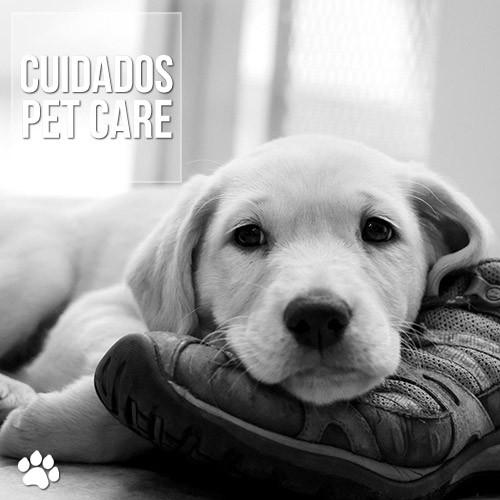 depressao em caes e gatos - Depressão em cães e gatos