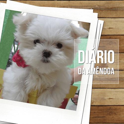 diario da amendoa - Diário da Amêndoa: Dicas sobre a idade e desenvolvimento dos cães