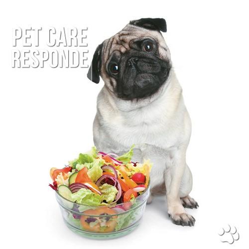 dieta vegetariana para caes e gatos - Dieta vegetariana para cães e gatos: É possível? NÃO!