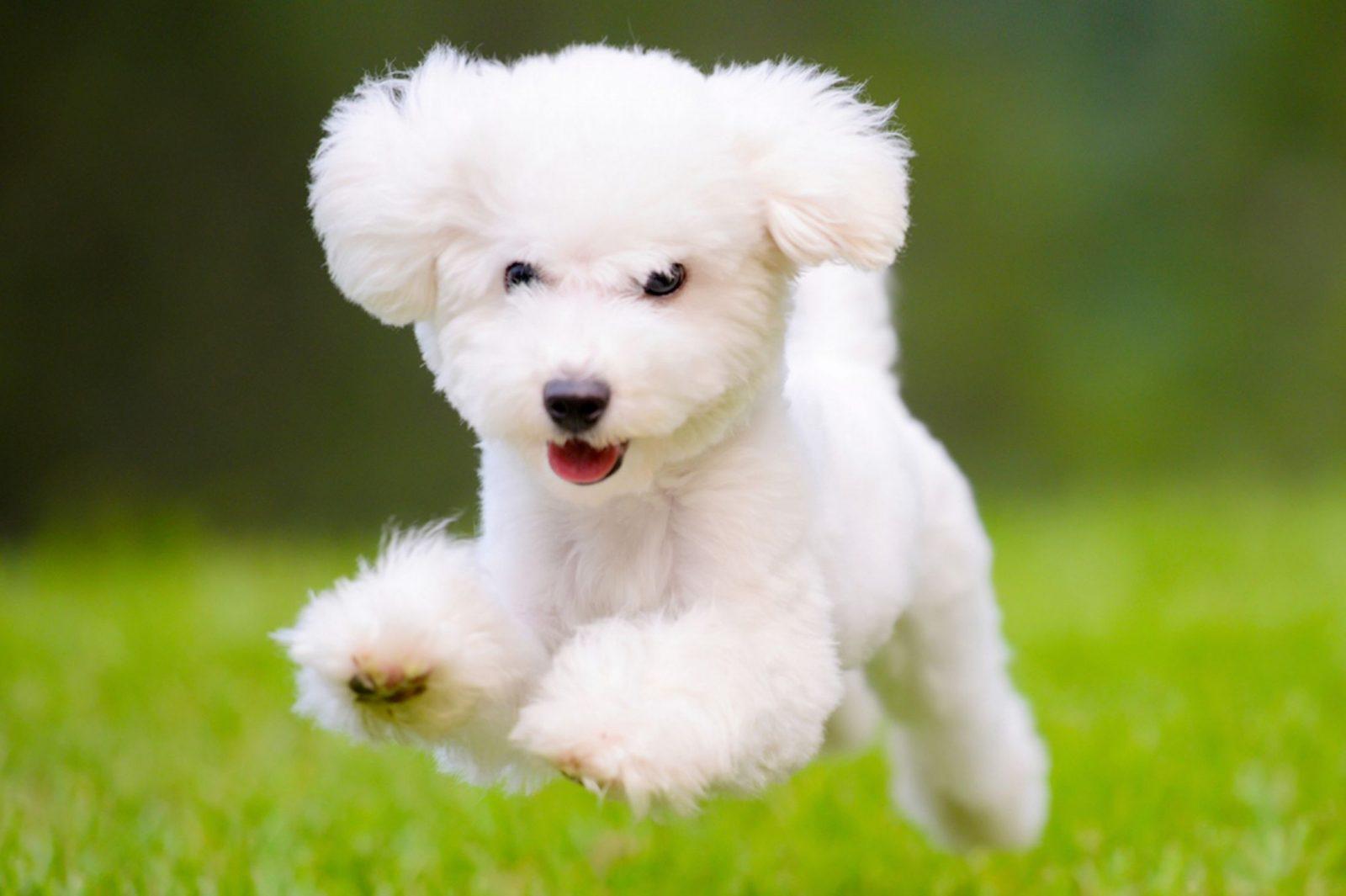dog1 - Pet Care no Dog Run