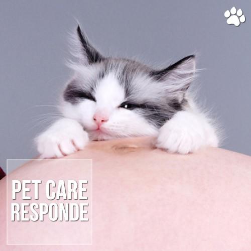 gravidas podem ter contato com caes e gatos - Grávidas podem ter contato com cães e gatos?