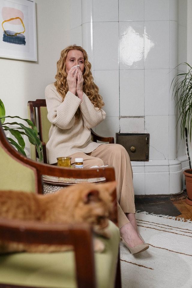 pexels cottonbro 6865162 - Alergia a gatos: Verdade ou mito?