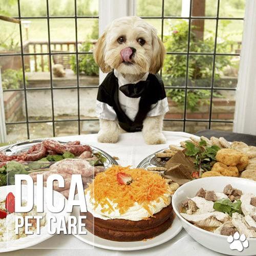 dieta caseira para caes e gatos - Dieta caseira para cães e gatos