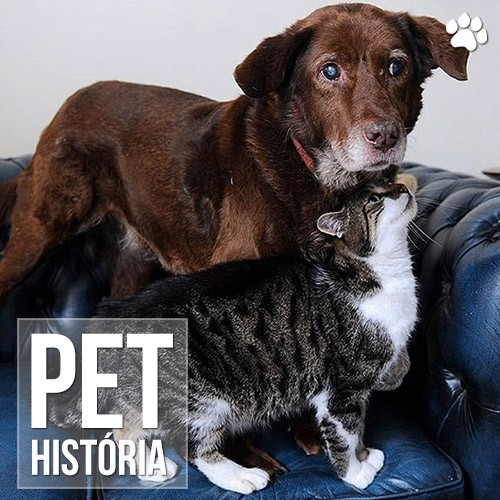 pet historia - A história do gato que virou guia de um cão cego
