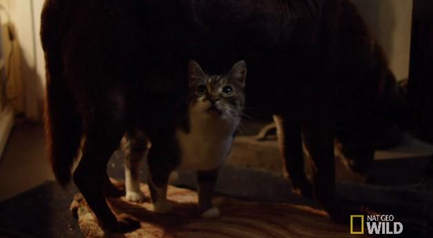 puddicat3