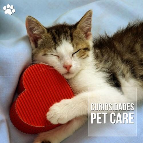 seu gato te ama veja os 10 sinais de que ele e apaixonado por voce - Seu gato te ama? Veja os 10 sinais de que ele é apaixonado por você