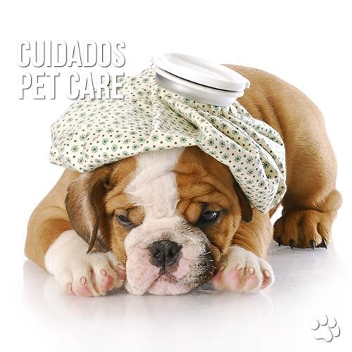 cuidados - Gripe e resfriado em cão e gato