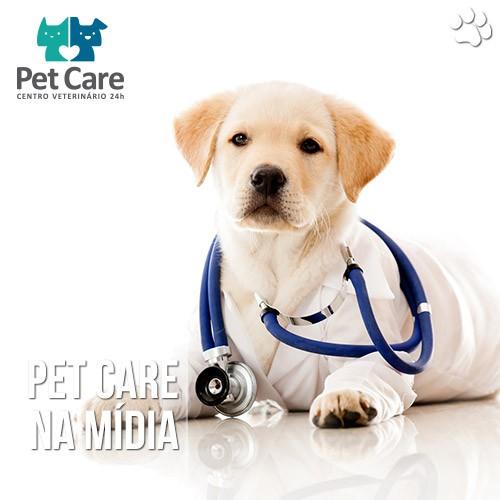 doenca do carrapato pet care - Doença do Carrapato: Muitos animais têm e o dono nem suspeita