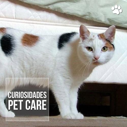 gato tricolor e sempre femea - Gato Tricolor é sempre fêmea?