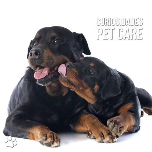 por que os cachorros lambem seus donos - Por que os cachorros lambem seus donos?