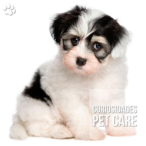 """por que os caes fazem cara de do - Por que os cães fazem """"cara de dó""""?"""